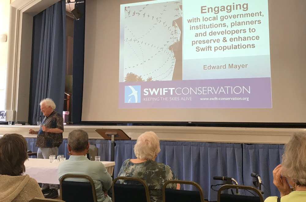 Swift Conservation